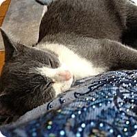 Adopt A Pet :: Savannah - Waxhaw, NC