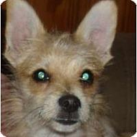 Adopt A Pet :: JOEY - Plainfield, CT