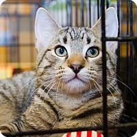 Adopt A Pet :: Ethan - Irvine, CA