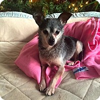 Adopt A Pet :: Squirt - Cary, IL