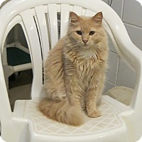 Adopt A Pet :: Eden - Geneseo, IL