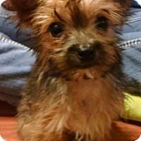 Adopt A Pet :: Sully - Statewide and National, TX