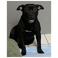 Adopt A Pet :: Cherry - Forked River, NJ