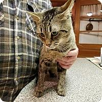 Adopt A Pet :: Nine kitty's urgent - Clay, NY