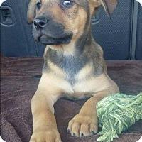 Adopt A Pet :: Dahlia - Dana Point, CA