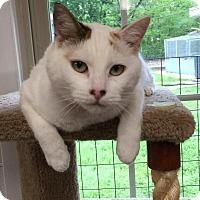 Adopt A Pet :: Tosha - Joplin, MO