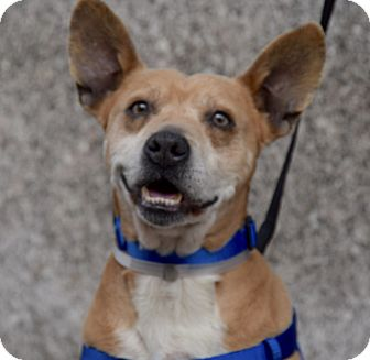Terrier (Unknown Type, Small) Mix Dog for adoption in New York, New York - Faber