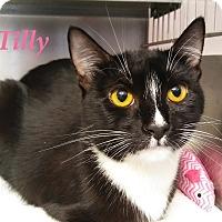 Adopt A Pet :: Tilly - El Cajon, CA