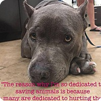 Adopt A Pet :: Skyye - Tampa, FL