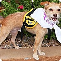 Adopt A Pet :: Puff - Gilbert, AZ