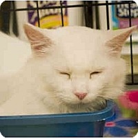 Adopt A Pet :: Snowflake - Richmond, VA