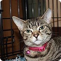 Adopt A Pet :: Sasha (MP) - Little Falls, NJ