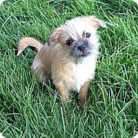 Adopt A Pet :: PAIGE - Mission Viejo, CA