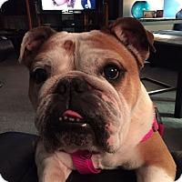 Adopt A Pet :: Lovie - Chicago, IL