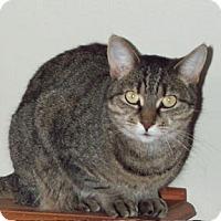 Adopt A Pet :: Janis Joplin - Verdun, QC