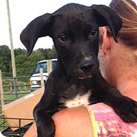 Adopt A Pet :: Benjamin - Medora, IN