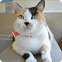 Adopt A Pet :: Monique - Oakland, CA