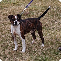 Adopt A Pet :: Judd - North Judson, IN