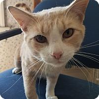 Adopt A Pet :: Bernie - Central Falls, RI