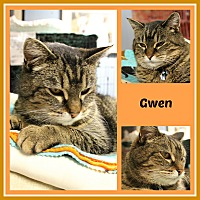 Adopt A Pet :: Gwen - New Richmond,, WI