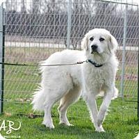 Adopt A Pet :: Crystal - SPECIAL NEEDS - Northville, MI