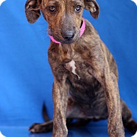 Adopt A Pet :: Morgana - Waldorf, MD