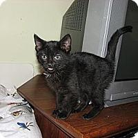 Adopt A Pet :: Lolita, Peekachoo, Lillian - Richfield, OH