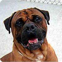 Adopt A Pet :: WINSTON - Phoenix, AZ