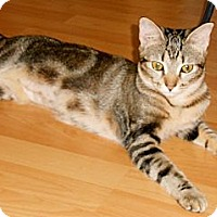 Adopt A Pet :: Katy Purry - Miami, FL