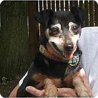 Adopt A Pet :: Minnie Pennie - Nashville, TN