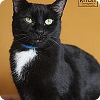 Adopt A Pet :: Holly - Lancaster, MA