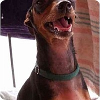 Adopt A Pet :: GQ Freezy - Phoenix, AZ