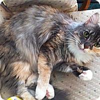 Adopt A Pet :: Maddie - Easley, SC