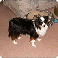 Adopt A Pet :: Bandit-Mini - Orlando, FL