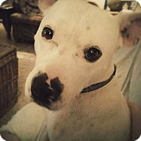 Adopt A Pet :: Knox - Hagerstown, MD