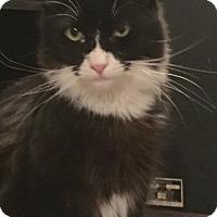 Adopt A Pet :: Chuffy - Kelso/Longview, WA
