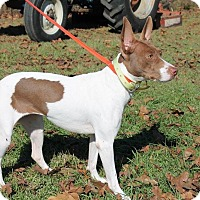 Adopt A Pet :: Baby Girl - Dawson, GA
