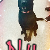 Adopt A Pet :: Nahla - Odessa, TX