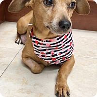 Adopt A Pet :: Teagan - Weston, FL