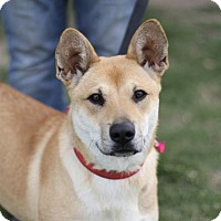 Adopt A Pet :: Hillery - Fresno, CA