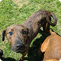 Adopt A Pet :: Stevie - Lisbon, OH