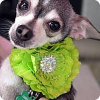 Adopt A Pet :: Clair - Baton Rouge, LA