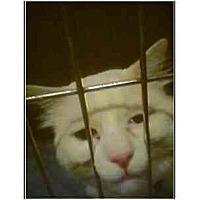 Adopt A Pet :: Charlie - Owasso, OK