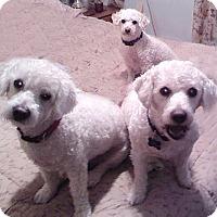 Adopt A Pet :: Lexi - East Hanover, NJ