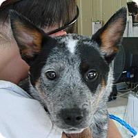 Adopt A Pet :: Rowan - Erwin, TN