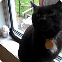 Adopt A Pet :: Tom - Delmont, PA