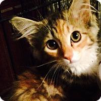 Adopt A Pet :: Harper - Chattanooga, TN