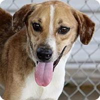 Adopt A Pet :: Benson - Groton, MA