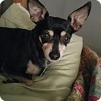 Adopt A Pet :: Isabella - Homewood, AL