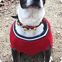 Adopt A Pet :: Lovely Lolita - Ozone Park, NY